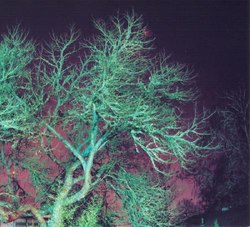 Trees in the Night II
