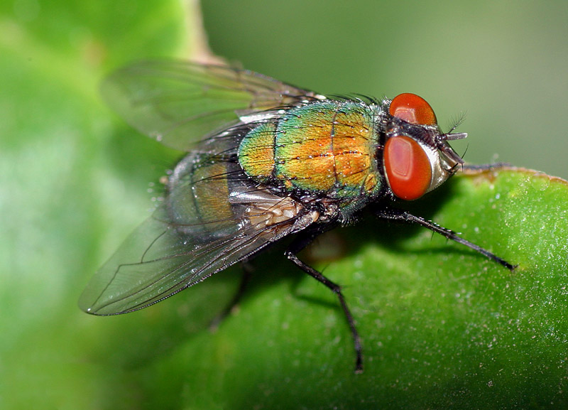 Colorful Fly!