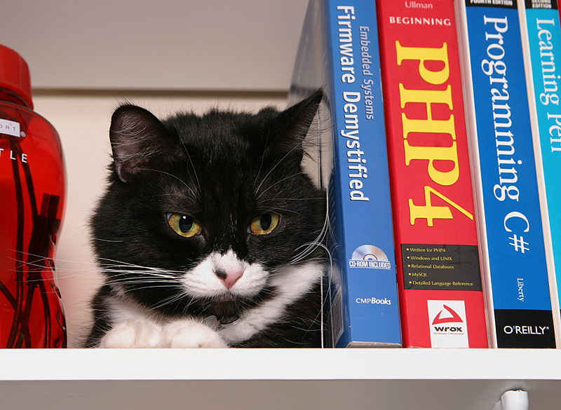 Oreo awakens on bookshelf