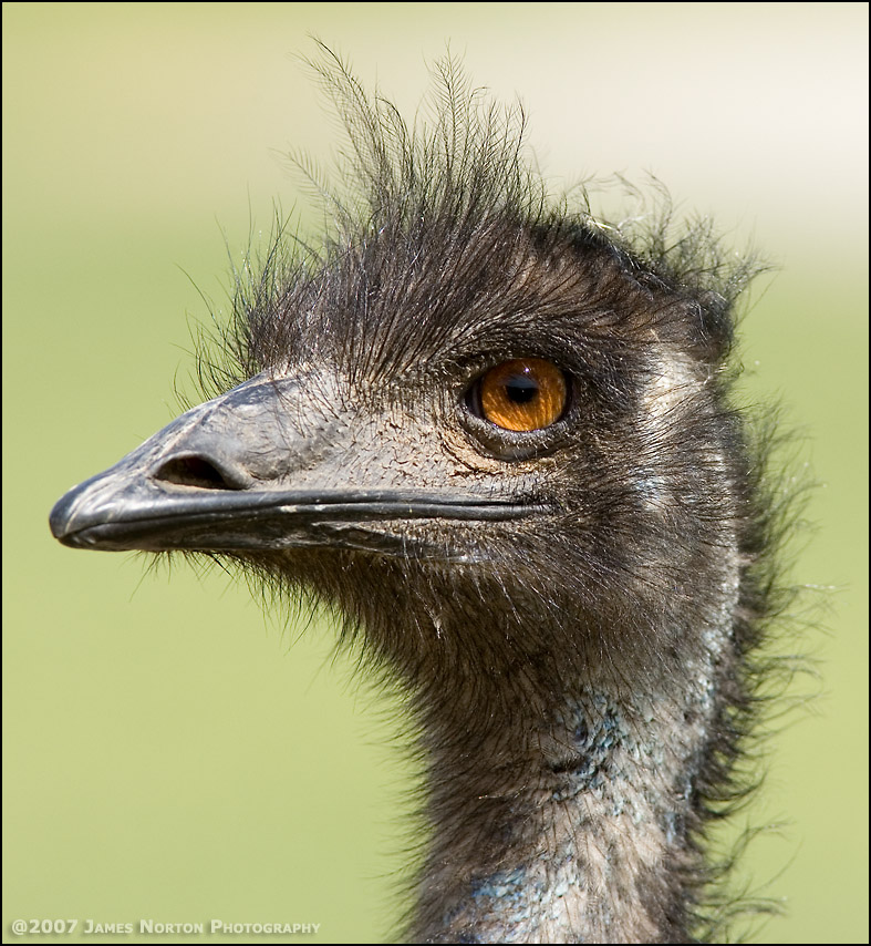 Ostrich at the Wildlife Safari